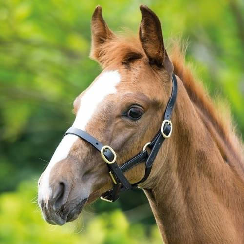 Shires Adjustable Leather Foal Headcollar
