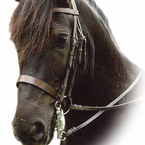 Sabre Eton Weymouth Bridle - Black