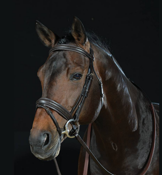 Collegiate Padded Headpiece Flash Bridle