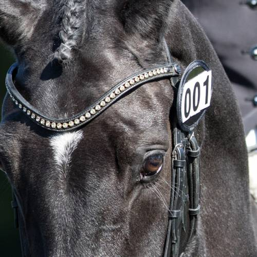 Equetech Bridle Number Holder