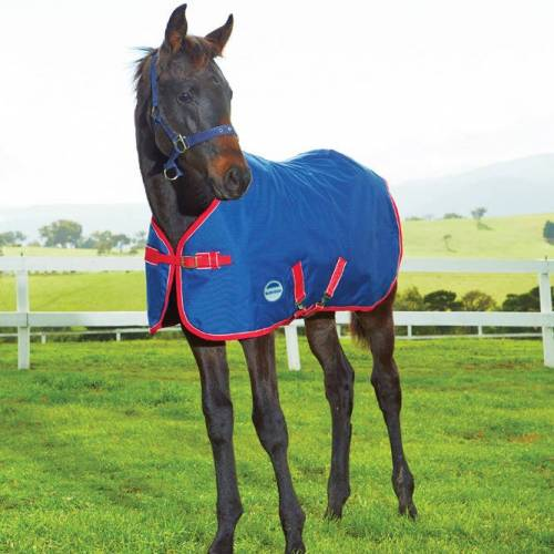Weatherbeeta 1200D Standard Neck Medium Foal Turnout Rug