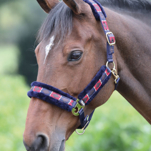 Shires Polo Fleece Headcollar - Red/Navy