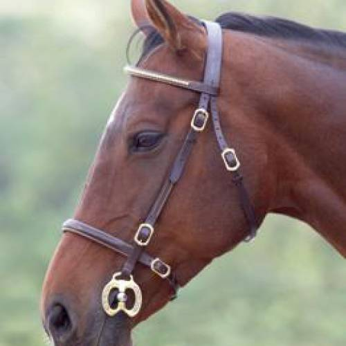 Clincher In-hand Bridle