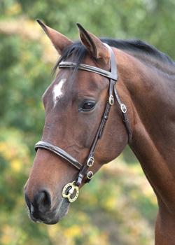 Blenheim Stitched In-hand Bridle