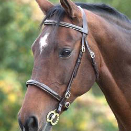 Shires Blenheim Stitched In-hand Bridle - Brown Full