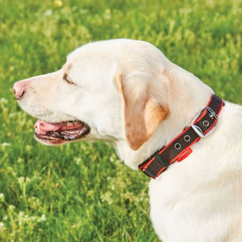Weatherbeeta Therapy-Tec Dog Collar