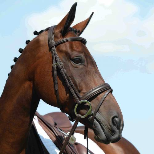 Collegiate Syntovia Padded Raised Flash Bridle