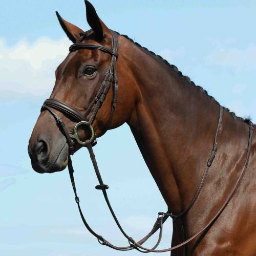 Collegiate Syntovia + Plain Flat Martingale