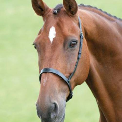 Blenheim Plain Cavesson Noseband
